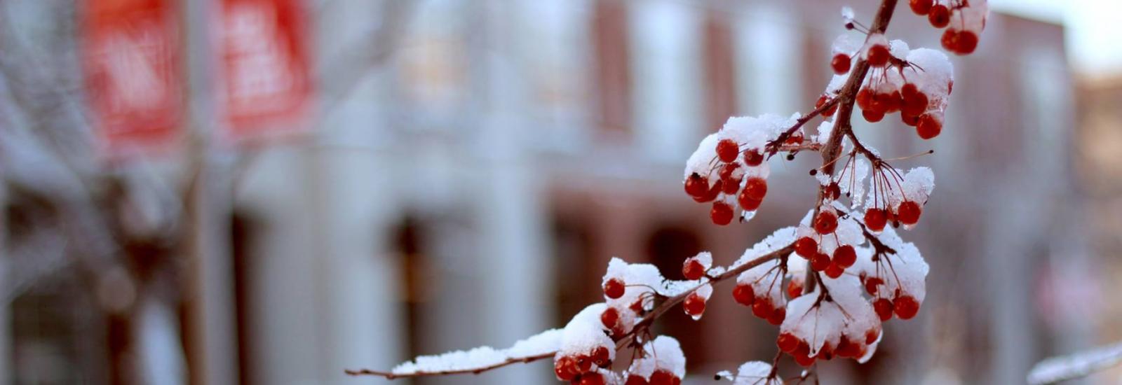 Winter at UNL